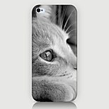 White Cat Pattern Case Back Cover for Phone5/5S Case