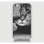 The Kitten Pattern Case Back Cover for Phone4/4S Case