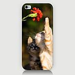 Curioso sobre o caso padrão gato de volta para cobrir Phone5 / case 5s