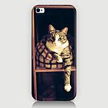 Letto caso del modello del gatto della copertura posteriore per Phone5 caso / 5s