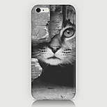 The Kitten Pattern Case Back Cover for Phone6 Case
