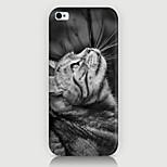 guarda il caso del modello del gatto torna coprire Phone5 caso / 5s
