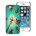 Summer Coconut Design Hard Case for iPhone 4/4S