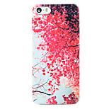 Kirschblütenmuster transparent pc Schutzhülle für iPhone 5 / 5s