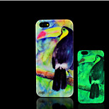 Toucan Pattern Glow in the Dark Hard Plastic Back Cover for iPhone 5 for iPhone 5s Case