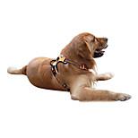 Dog Harness Adjustable/Retractable Black / Green / Orange Nylon