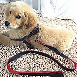 Cat Dog Harness Leash Adjustable/Retractable Breathable Running Safety Training Solid Fabric