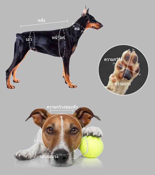 วัดขนาดอย่างไร