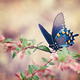 Rukav leptir