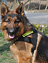 Universal Pet Suit of Night Safety Reflective Harness with Leash for Dogs (Assorted Colors)