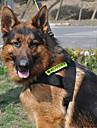 Универсальный Pet Костюм ночь безопасности Отражающая комплект с поводок для собак (разных цветов)