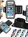 sport écran tactile de cas de brassard pour iPhone 6 plus / 6/5 / 5s / 5c (couleurs assorties)