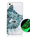 кошка рисунок светящийся телефон случае задняя крышка чехол для iphone5c