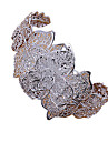 серебро сладкие женская покрытием Браслет-манжета (1 шт)