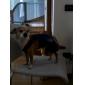 Köpekler için kot pantolon tarzı (xs-xxl, mavi)