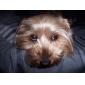 мишура отделкой юбка для собак (XS-XXL, фиолетовый)