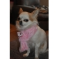 écharpe de diamants de style coeur pour chiens et chats (xs-m, couleurs assorties)