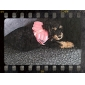 Dog Harness / Leash Breathable / Cute and Cuddly Pink Textile