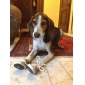 Носки и ботинки для Собаки Зеленый Весна/осень XS / S / M / L / XL Терилен