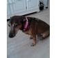 stilfuld blinkende halsbånd til hunde (29-39cm/11.4-15.3inch, rød)