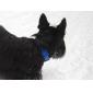Collare regolabile in nylon per cani (a colori assortiti, SL)