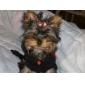 Курточка с капюшоном для собак и кошек