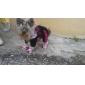 Собаки Ботинки и сапоги Красный / Синий / Розовый Весна/осень ФлисСобака Обувь