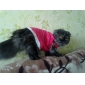 Собаки Футболка Красный Одежда для собак Весна/осень Животный принт / Сердца
