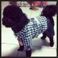 개 점프 수트 블루 강아지 의류 겨울 모든계절/가을 청바지 패션 카우보이