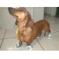 Socks & Boots for Dogs Black Spring/Fall XS / S / M / L / XL PU Leather