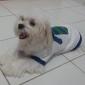 Katoenen T-Shirt Met Stropdasopdruk Voor Honden (XS-M)