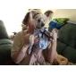 Собаки Футболка Синий Одежда для собак Лето Весна/осень Полоски На каждый день