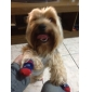 gentleman stil randig halkskyddande strumpor för hundar (SL)