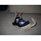 Dog Shirt / T-Shirt Black Dog Clothes Summer Spring/Fall Skulls Fashion Halloween