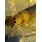 klassieke zwarte kleine verstelbare strikje voor honden katten