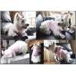 Собаки Толстовки Розовый Одежда для собак Зима Животный принт