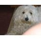 capelli trimmer pettine per animali domestici (verde, 4 pale incluso)