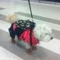 Собаки Рюкзак Зеленый / Синий / Розовый Одежда для собак Весна/осень камуфляж Doglemi