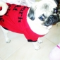 Dog Shirt / T-Shirt Red Dog Clothes Summer Spring/Fall Letter & Number Cute
