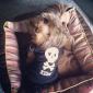 Lovely Killer Skull Pattern Vest for Dogs (Black,XS-L)