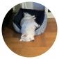 cómoda franja ósea de cama de algodón patrón para perros y gatos