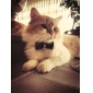 Classical Black Tiny Adjustable Bow Tie for Dogs Cats