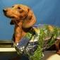 estilo hawaii vista nocturna patrón camiseta para perros (XS-XL)