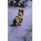 Atmungsaktive Velcro Stiefel für Hunde (XS-XL, Schwarz)