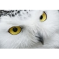 Cute Owl Case Metal Ring Watch