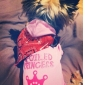 Spolied Princess Pattern Hoodie for Dogs (Pink,XS,M,L)