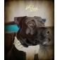 Ошейник для собак с шипами (ассортимент цветов)