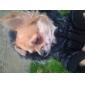 개 코트 / 후드 블랙 강아지 의류 겨울 솔리드