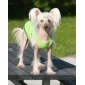 Fetching Ball Pattern Vest for Dogs (Black,M-L)
