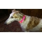 Adjustable Rechargeable Safty Nylon Collar with LED Light (Assorted Colors)